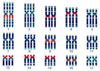 国外试管婴儿有效解决染色体平衡易位