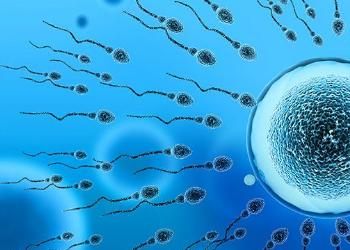 泰国试管婴儿解决精子活力差的问题