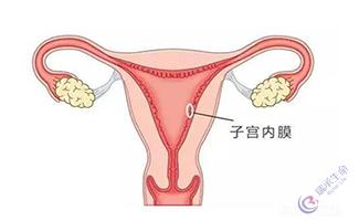 试管婴儿:子宫内膜生长异常的原因你需要知道!