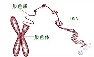 深圳一男子因染色体异常,赴泰国试管婴儿成功怀孕