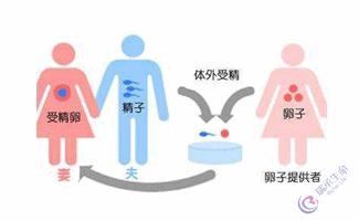 影响供卵试管婴儿成功率的因素