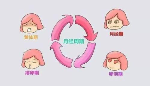 排卵过程.jpg