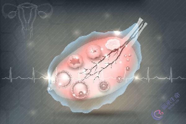 如何让卵巢准时排出优质的卵子?瑞承生命来为你支招